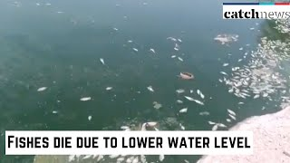 Fishes Die Due To Lower Water Level In Jodhpur's Pond | Catch News