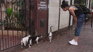 Adah And Her Mother Feeding Stray Animals On Pali Hill