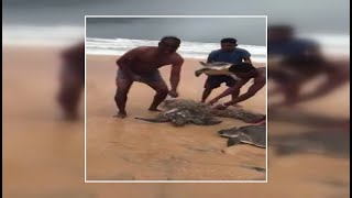 WATCH: These water-sports operator saved 5 Olive Ridley tutles which got tangled in the nets!