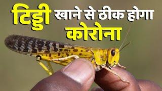 टिड्डी खाने से ठीक हो जायेगा Corona, Pakistan के मंत्री का अजीबोगरीब दावा | Locust