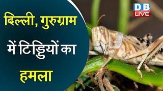 Locust Attack : Delhi NCR पहुंचा टिड्डी दल   दिल्ली, गुरुग्राम में टिड्डियों का हमला   #DBLIVE