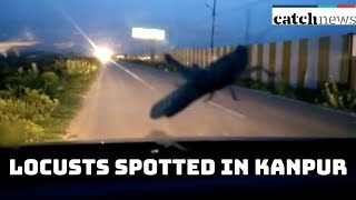 Swarms Of Locusts Spotted In Kanpur | Catch News