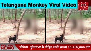 Telangana Monkey Viral Video // THE NEWS INDIA
