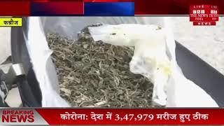Uttar Pradesh News // मेथी का साग बताकर दे दिया गांजा, परिवार के 6 लोगों की हालत गंभीर