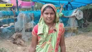 इस गांव की महिलायें पुटू उत्पादन कर आत्मनिर्भर बन रही है cglivenews