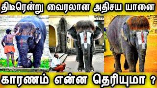 திடீரென்று வைரலான அதிசய கோவில் யானை காரணம் இதுதான்|Pop Cut Sengamalam Elephant|Tranding News Tamil