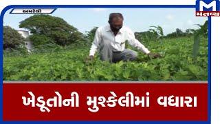 Amreli : ખેડૂતોની મુશ્કેલીમાં વધારો