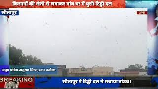 सीतापुर में टिड्डी दल ने मचाया तांडव।
