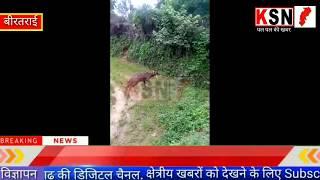 कोरबा/उरगा/बीरतराई/लगातार हो रही हिरण के मौत की घटनाएं......