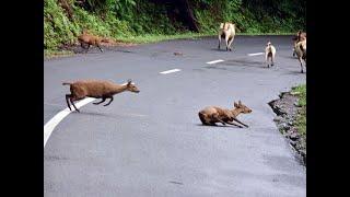 Animals die as flood waters submerge Assam's Kaziranga national park