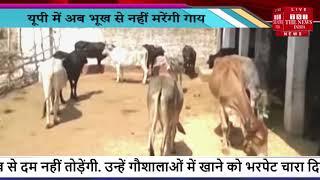 Uttar Pradesh में अब भूख से नहीं मरेंगी गाय, ये है योजना