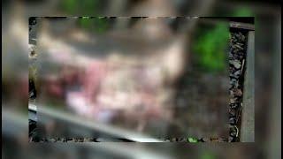 #Tragedy | 7 buffaloes killed by speeding train one calf hurt