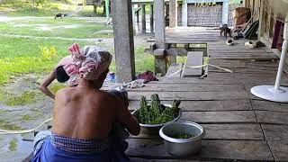 Village life of Mising Tribe, Assam. আমাৰ গাঁৱৰ দৃশ্য