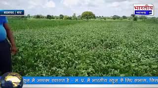 धार जिले के बदनावर तहसील में बारिश की बैरूखी से किसानो की चिंता बढ़ी। #bn #Dhar
