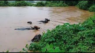 Rain wreaks havoc across Goa, water level rising fast, Ibrampur to flood this year too?