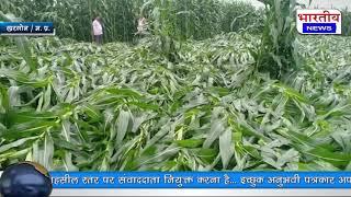 मुसलाधार बारीश से खेतो मे भारी नुकसान, खेतो मे मक्का व सोयाबीन की फसल को किया बर्बाद। #bn #mp