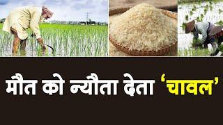 चावल में मौजूद आर्सेनिक बढाए कार्डिएक अरेस्ट का खतरा, भारत को अलर्ट रहने की ज़रूरत