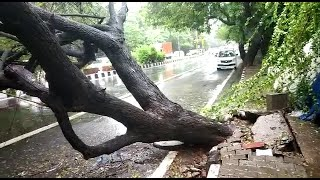 दिल्ली में बारिश के बाद कहीं धंसी सड़क तो कहीं टूटकर गिरा पेड़