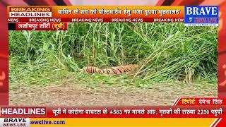 शिकारियों के द्वारा लगाये गये अबैध फंदे में फंस कर बाघिन की मौत, समूचे वन विभाग में मचा हडकंप
