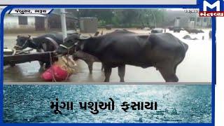 Jambusar: માંગણાદ ગામ બેટમાં ફેરવાયું   | Jambusar  | Rain
