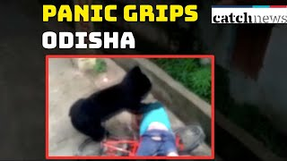 OMG! Panic Grips Odisha's Bhawanipatna After Wild Bear Strays Into Town | Catch News