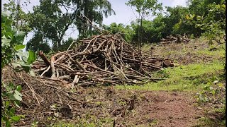 #Assagao   Another incidence of illegal chopping of trees at Assagao