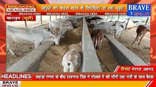 बहराइच में बनी गौशाला में बड़ी लापरवाही आयी सामने, गौशाला में गायों की हालत दयनीय | BRAVE NEWS LIVE