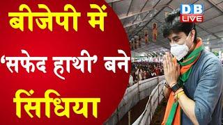 BJP में 'सफेद हाथी' बने  Scindia | Jyotiraditya Scindia ने बिगाड़ा BJP का चुनावी गणित |#DBLIVE
