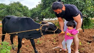 Farmhouse diaries ???? | Ayra and Yash New Video | Radhika Pandit | Yatharv