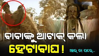 Face to Face! Baba vs Heta Bagha | Satya Bhanja
