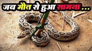 खतरनाक Russell viper सांप का  रेस्क्यू करबचाई जान, Venomous Snakes of India| रसेल वाइपर