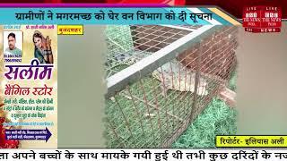 Bulandshahr News // खुर्जा क्षेत्र के गांव हमीरपुर में मगरमच्छ निकलने से मचा हड़कंप