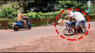 Rise in accidents in Goa due to stray cattle menace