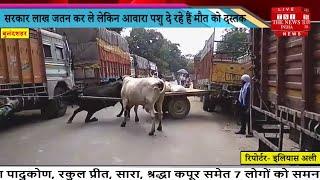 Bulandshahr // उत्तर प्रदेश सरकार लाख जतन कर ले लेकिन आवारा पशु दे रहे हैं मौत को दस्तक