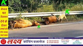 4 गायों की मौत के बाद 2 और गाएं मिली मृत, बरनाला रोड पर मृत गायों को कुत्ते नोंच रहे, भयावह तस्वीरें
