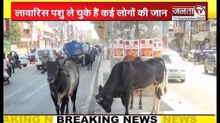 बहादुरगढ़- लावारिस पशुओं का मामला पहुंचा कोर्ट, 6 अक्टूबर को होगी सुनावाई