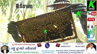 मधुमक्खी पालन कर गीगोरानी से सोमवीर बैनिवाल कमा रहे लाखों रूपए, जानिए पूरी प्रक्रिया l #Bee keeping