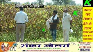 खराब फसल की स्पेशल गिरदावरी शुरू l अधिकारियों के साथ साथ के हरियाणा की टीम l कितना मिलेगा मुआवजा l