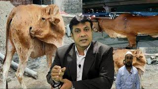 Beef | Janwaro Ki Is Bemari Ko Lekar Qurashi Bridari Ke Logo Ne Kya Kaha | Must Watch |@Sach News