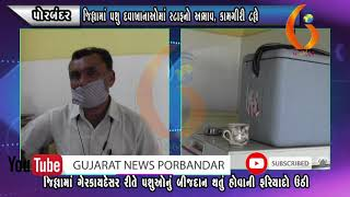 PORBANDAR જીલ્લામાં પશુ દવાખાનાઓમાં સ્ટાફનો અભાવ, કામગીરી ટલ્લે 10 10 2020  Gujarat News Porbandar