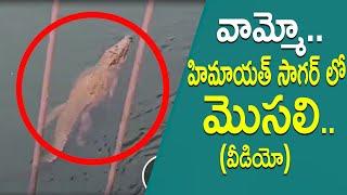 వామ్మో... హిమాయత్ సాగర్ లో మొసలి..Crocodile Found in Himayat Sagar Lake | Hyderabad | TopTeluguTV