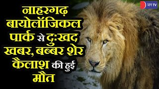 Bad News For Wildlife Lovers | जयपुर के नाहरगढ़ बायोलॉजिकल पार्क में बब्बर शेर कैलाश की मौत