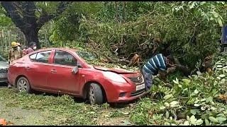 WATCH: tree branch falls near Vasco garden, damages three vehicles