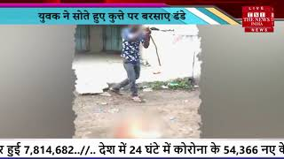 Viral Video // युवक ने कुत्ते पर बरसाए डंडे, Dog की हुई मौत