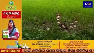 Kamakshya Nagar : ସୋଗର ଗାଁରେ ହାତୀ ଆତଙ୍କ
