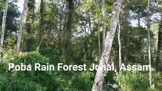 A Scene Of Poba Rain Forest