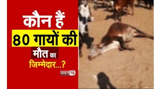 पंचकूला में करीब 80 गायों की मौत, जांच में जुटी पशु चिकित्सकों की टीम