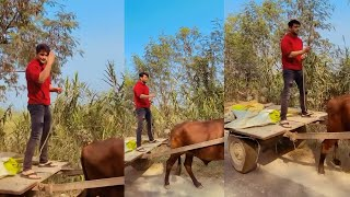 Siddharth Shukla Riding Bull Cart in Punjab Video goes Viral