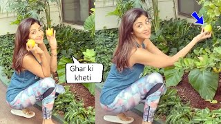 Shilpa Shetty is Very proud as she plucks Huge lemons from Her kitchen garden At Raj Kundra House