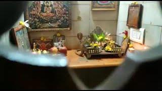 ಮೈಸೂರಿನಲ್ಲಿ ನಿವಾಸವೊಂದರ ದೇವರ ಮನೆಯಲ್ಲಿ ಹೆಡೆ ಎತ್ತಿ ಕುಳಿತ 'ನಾಗರಹಾವು'..!